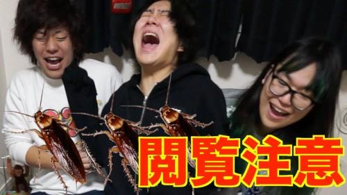 マホト ゴキブリ01