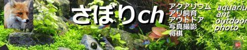 さぼりch プロフィール02